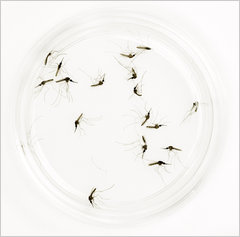 Adam Nadel/Malaria Consortium