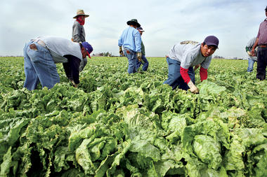 Legal laborers – mostly Mexicans – picked winter lettuce near Somerton, Ariz., in February 2009. As more legal and illegal immigrants stay home, there is concern about how it will affect the US labor pool. This is part of the cover story project in the April 9 issue of The Christian Science MonitorWeekly magazine.