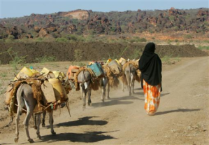 A Kenyan woman walks with her donkeys carrying water after trekking 6 km (3.7 miles) to the only well with water in the Kenyan town of El Wak, 1,530 km (951 miles) from the capital Nairobi, in this file photo taken on December 19, 2005. REUTERS/Antony Njuguna